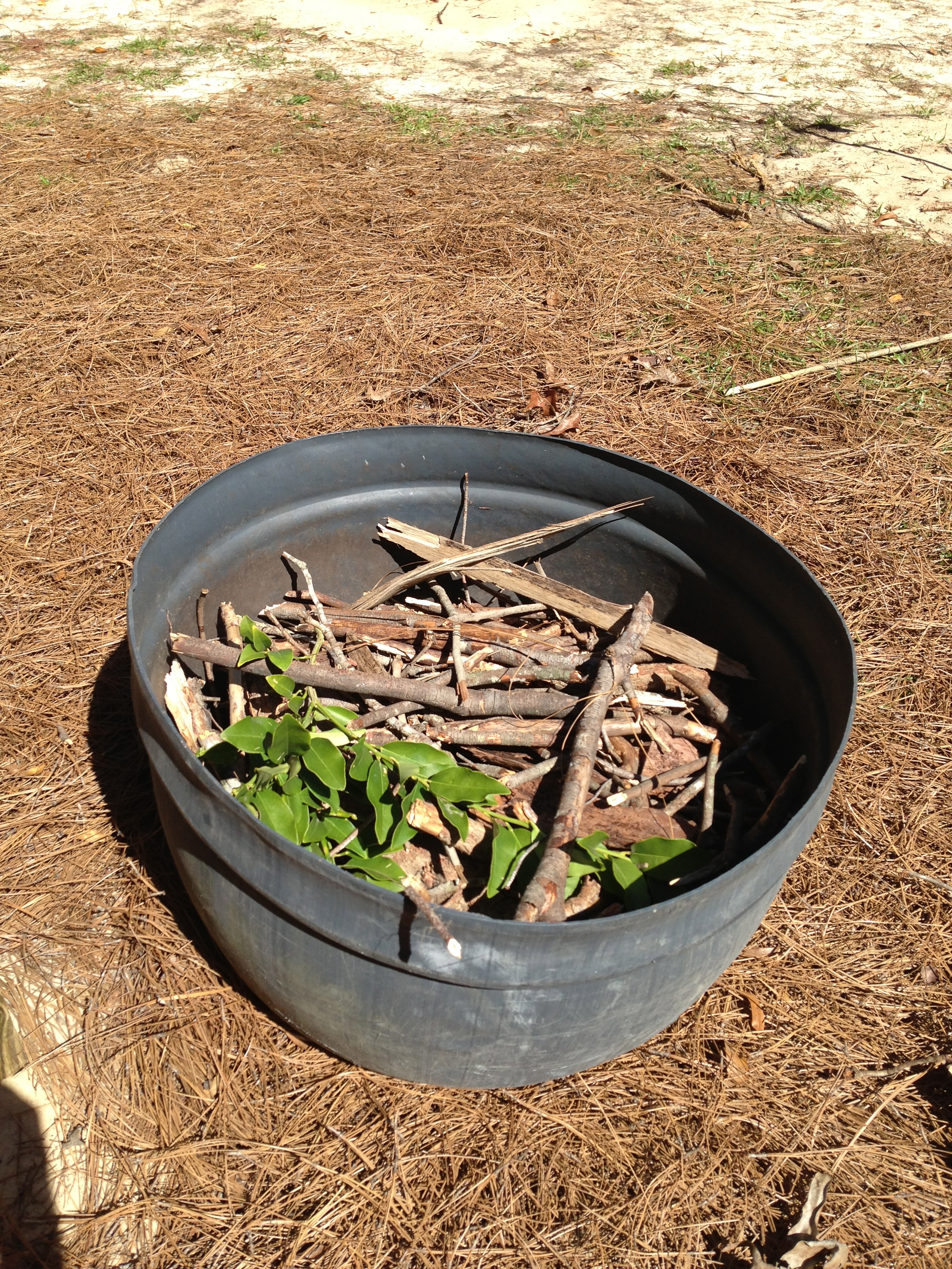 how to grow strawberries in a barrel
