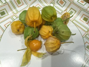 Coastal Ground Cherries on plate